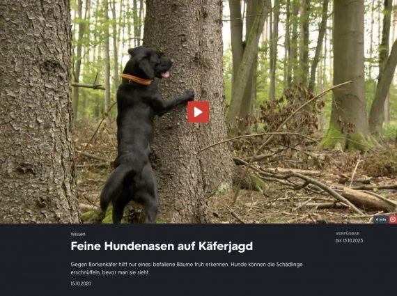 Borkenkäfer-Spürhund 3sat nano